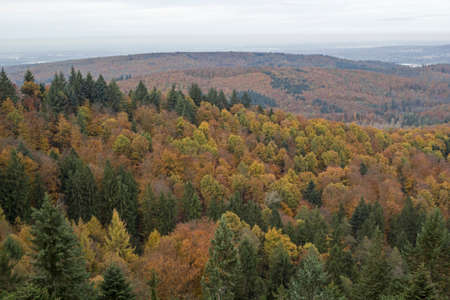 momentariness: black forest in autumn Stock Photo