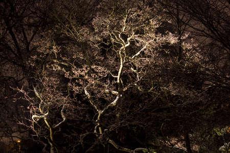 maan licht in boom