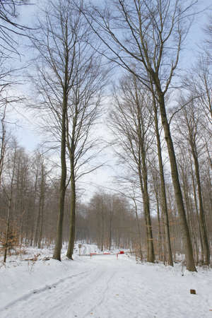 winterly: winterly forest