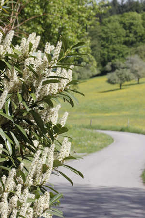 snapdragon: Flowers leading the way