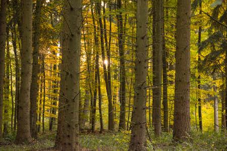 momentariness: autumn in German Odenwald region Stock Photo