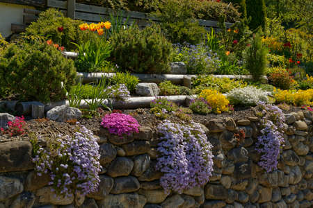 snapdragon: flowers on a garden wall