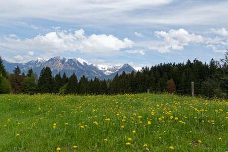 tree marigold: meadow in the austrian alps