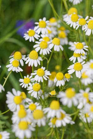 odour: flowers