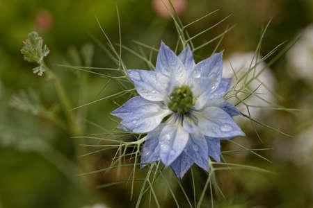 odour: flower