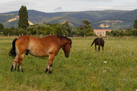 horses on paddock Stock Photo