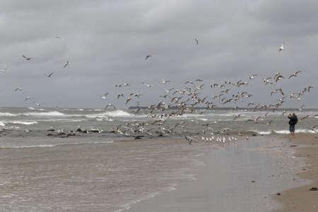 sports shell: seagulls