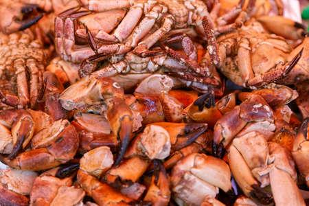 fishtank: crabs Stock Photo