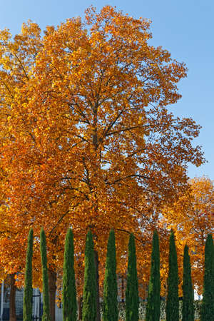 momentariness: autumn leaves