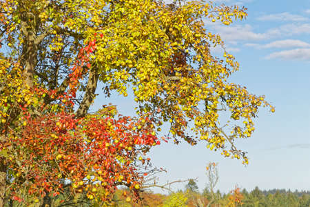 momentariness: apple tree in autumn