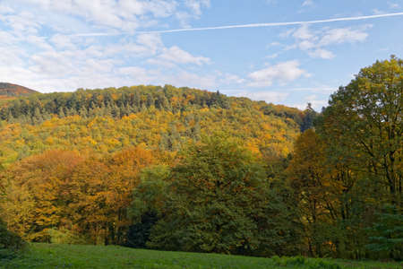 momentariness: Forest in autumn