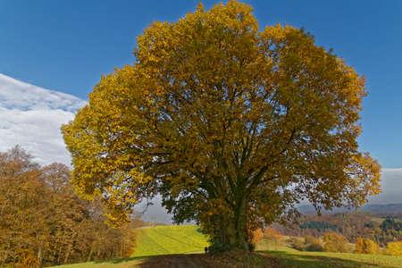 momentariness: tree in autumn Stock Photo