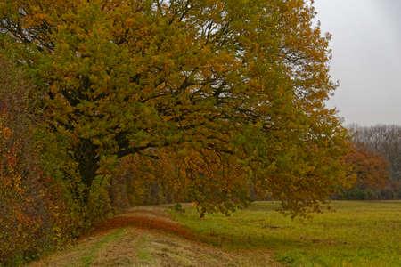 momentariness: landscape in autumn