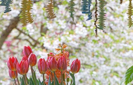 tulip decoration