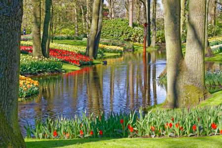 park with river and tulips