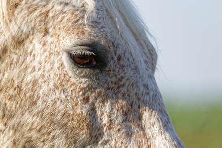 horse detail Zdjęcie Seryjne