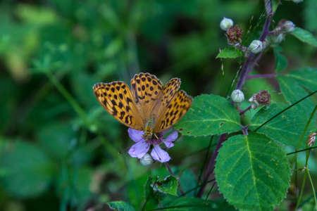 butterfly background. Banco de Imagens - 106167133