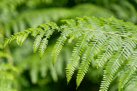 Fern leaves background.