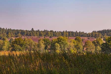 heathland Lueneburg Heath Reklamní fotografie