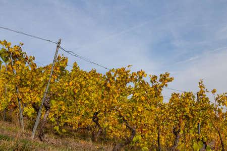 Autumn in the vineyards at Weinsberg near Heilbronn Germany