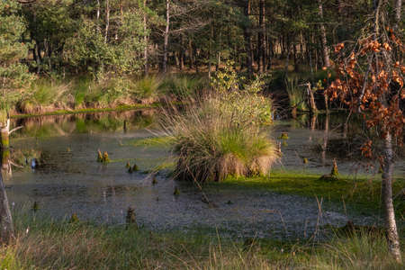 Moorlands in Germany: Pietzmoor near Scheveningen near Lueneburg in Germany in the heathland Reklamní fotografie