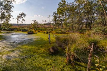 Moorlands in Germany: Pietzmoor near Scheveningen near Lueneburg in Germany in the heathland Stok Fotoğraf