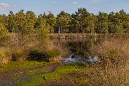 Moorlands in Germany: Pietzmoor near Scheveningen near Lueneburg in Germany in the heathland Stock Photo