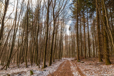 winterly forest