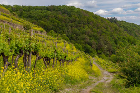 Vineyard and castle at the river Neckar in Germany 스톡 콘텐츠