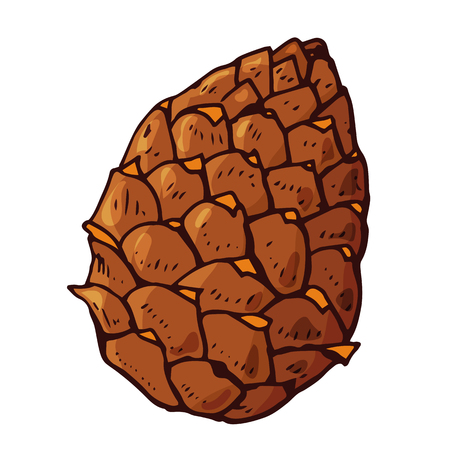 Pine cone. Festive element for christmas decoration, design, greeting cards and invitations. Isolated on white background. Vintage style. Vector color hand drawn illustration.