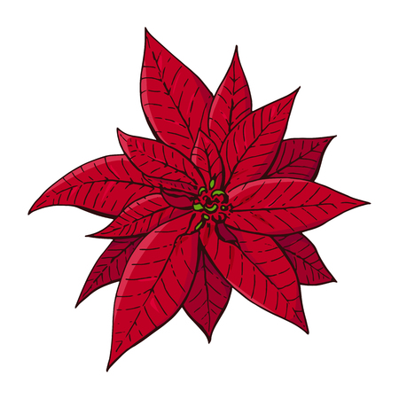 Red christmas poinsettia. Christmas symbols illustration. Design element for Christmas decoration. Beautiful flower. Isolated on white background. Vintage style. Vector color hand drawn illustration. Ilustrace