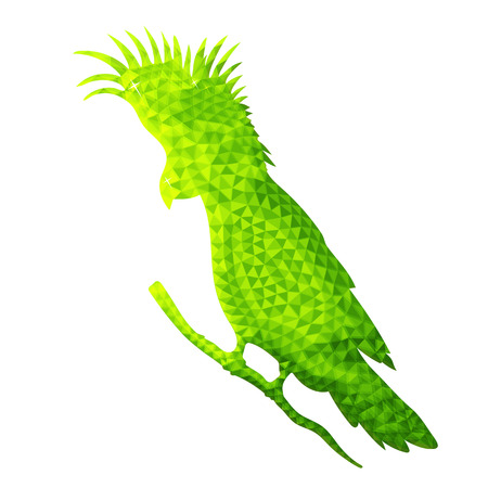 Vector design of parrot in low poly style. Bird of australia. Green color. Isolated on white background. Silhouette of cockatoo from polygons side view. Vector color illustration.