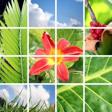 Garden/Spring Collage Stock Photo - 952174
