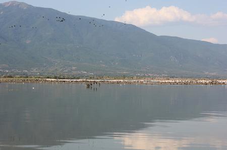 Lake of Kerkini Serres Greece Europe Archivio Fotografico