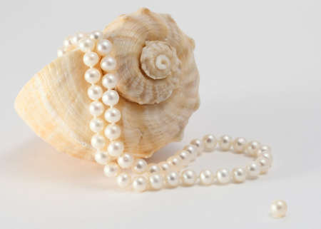 freshwater pearl: Shell from the Sea and string of Pearls