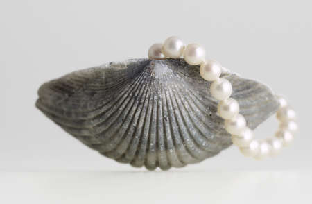 natural sea shell pearl necklace elegant isolated Stock Photo - 2557369