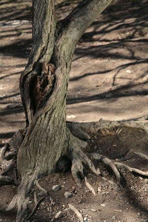 tree root knothole age shadow single dry old ruine photo