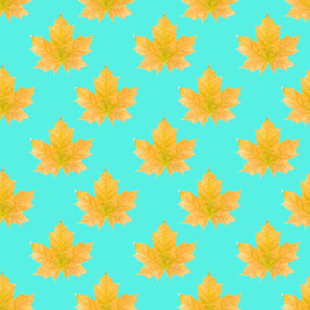 Seamless pattern with autumn yellow maple leaves on turquoise blue background. Isometric background, texture