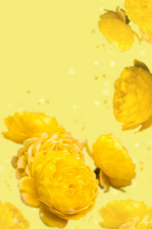 Wallpaper with yellow roses on yellow background
