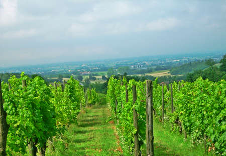 Vineyards with Po Valley on background