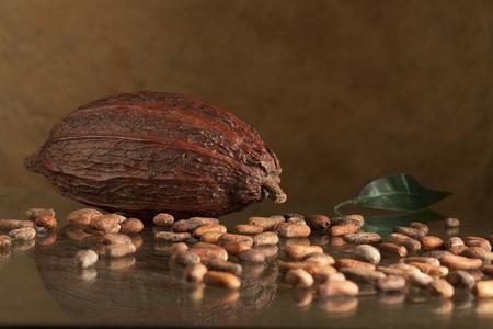 cocoa bean on table photo