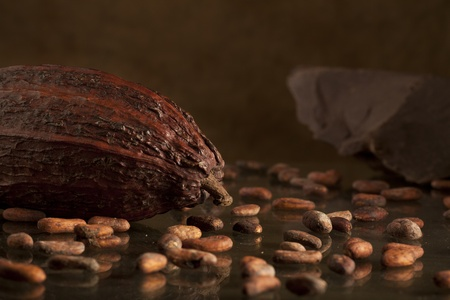 cocoa bean with chocolate on background photo