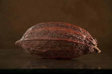 cocoa bean photo