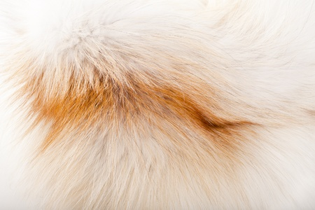 fox fur:  background of red fox fur