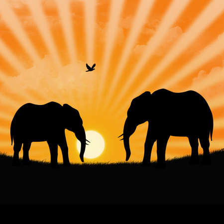 elefanten: Abbildung der Savanne mit zwei Elefanten w�hrend ein Sonnenuntergang
