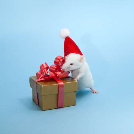 The little Christmas Mouse Stock Photo - 11327388