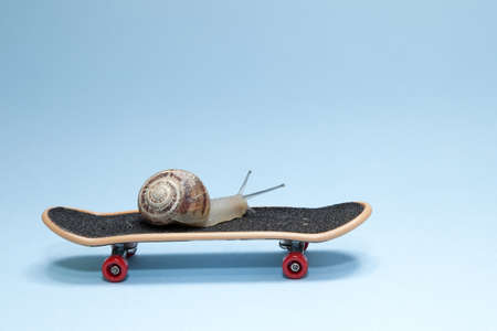Snail and skateboard