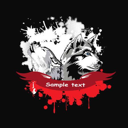 wolf face: Vector head of a dogs Siberian Husky in a frame