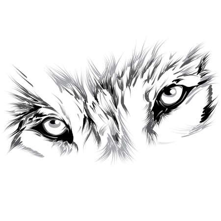 cabe�a de animal: Lobo
