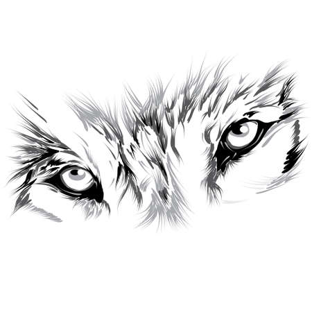 eye tattoo: Wolf